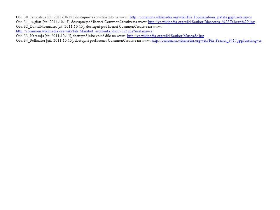 Obr. 30_Jamcelsus [cit. 2011-10-15], dostupné jako volné dílo na www: http://commons.wikimedia.org/wiki/File:Topinambour_patate.jpg?uselang=cs